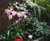 庭園について